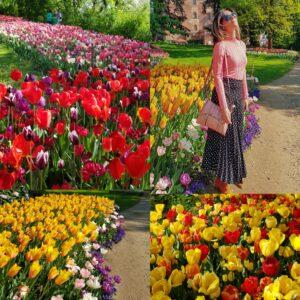 [:it]FIELDS OF FLOWERS IN ITALY AS IN HOLLAND: PLACES AND ADDRESSES[:in]FIELDS OF FLOWERS IN ITALY AS IN THE HOLLAND: PLACES AND ADDRESSES[:]