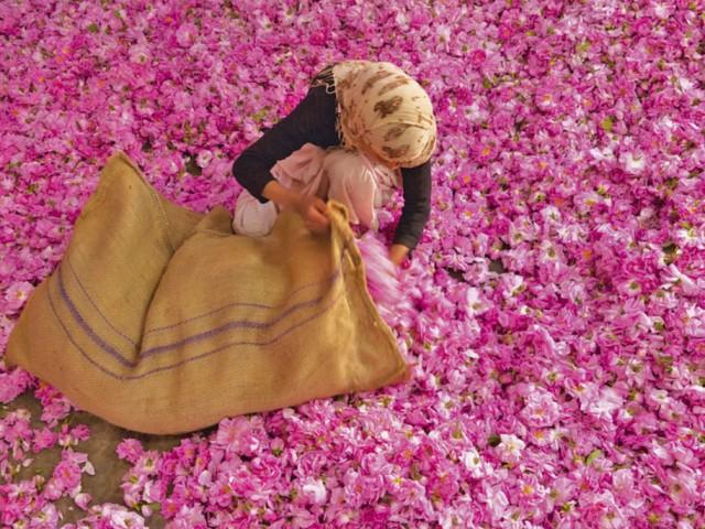 Le fioriture più belle del mondo: le più particolari e insolite. Dove vedere i campi di fiori più incredibili.